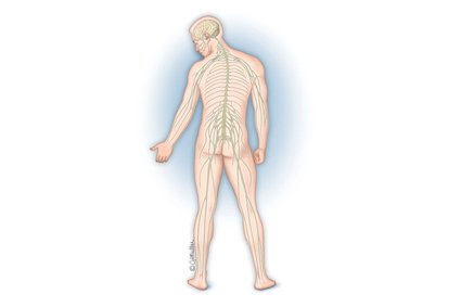 تيبس العضلات